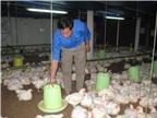 Kiểm soát chặt chẽ dịch bệnh, đảm bảo nguồn cung thực phẩm cuối năm
