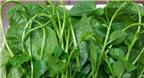 Tác dụng và tác hại của rau mồng tơi