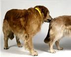 Giải mã những hành vi kỳ quặc của loài chó
