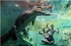 Hãi hùng với trải nghiệm làm mồi cho cá sấu ở Úc