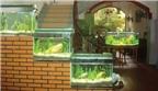 Cách chọn bể cá cảnh trong nhà theo phong thủy