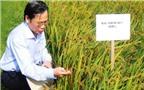 Hiệu quả lớn từ 7.000ha lúa chất lượng cao