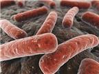 Nhận biết triệu chứng và điều trị bệnh lao phổi