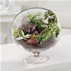 Cách tự trồng rau sạch tại nhà hay và đơn giản