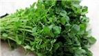 Lợi ích chữa bệnh của rau cải xoong ít ai ngờ đến