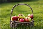 Công dụng mới của táo đối với sức khỏe con người