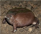 12 loài động vật xấu xí có nguy cơ tuyệt chủng