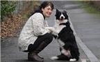 Chó giúp chủ phát hiện ung thư vú