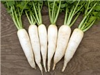 Bài thuốc trị ho từ củ cải trắng
