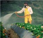 Nguyên tắc rửa rau loại bỏ chất gây ung thư