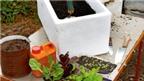 Cách trồng rau sạch trong thùng xốp đơn giản