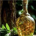 Cách ngâm rượu và dùng rượu ngâm cây dâm dương hoắc