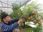 Độc đáo quất bonsai đón Tết