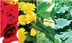 Dùng hoa cho người cao huyết áp