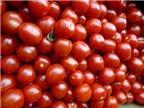 Cách trồng cây cà chua bi trong chậu