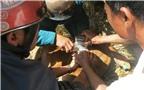 Ngăn chặn bệnh lở mồm long móng trên gia súc