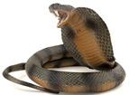 Tác dụng chữa bệnh từ con rắn