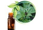 Bài thuốc từ cây é
