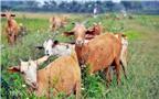 Cách chăm sóc, nuôi dưỡng dê từ sơ sinh đến cai sữa