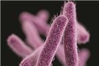Dùng đúng kháng sinh để giảm sự kháng thuốc
