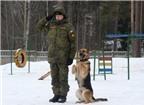 Quân khuyển của Nga được huấn luyện như thế nào?