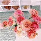 Những cách cắm hoa đơn giản mà đẹp
