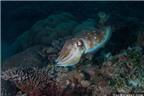 Những sinh vật biển có siêu năng lực phi thường