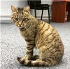 """Mèo ăn vụng nổi tiếng ở Nga làm """"sao"""" trong talk show"""
