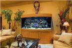 Phong thủy: Dùng bể cá để hạn chế tán khí