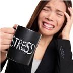 Ăn gì giúp giảm stress?