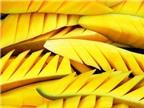 9 loại trái cây giúp giảm cân hiệu quả