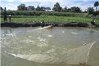 Chăm sóc ao nuôi cá đảm bảo năng suất trong mùa nóng