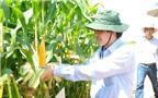 Lợi ích của cây trồng biến đổi gen GMO