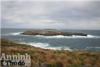 Bảy ngày vòng quanh Australia (4): Độc đáo đảo Kangaroo!
