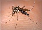 Dấu hiệu nhận biết của bệnh sốt xuất huyết