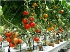 7 loại rau mùa hè lý tưởng nên trồng tại nhà