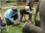 Chữa bệnh cho voi