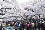 Các điểm du lịch nổi tiếng ở Tokyo