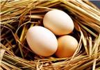 Cách bảo quản trứng tốt nhất vào mùa hè
