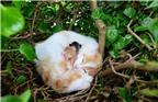 Kỳ lạ mèo đẻ con ở tít trên tổ chim cao