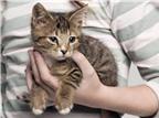 Nuôi mèo ảnh hưởng đến trí thông minh của trẻ