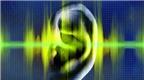 Âm thanh không dành cho 18+ và những tiếng bạn chẳng thể nghe thấy