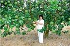 Kỹ thuật trồng cây bưởi da xanh đúng cách cho quả quanh năm