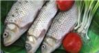 Bất ngờ với tác dụng chữa bệnh từ cá trôi