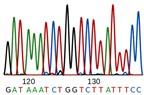 Các kỹ thuật phân tích DNA tìm sự khác biệt giữa 2 người sinh đôi