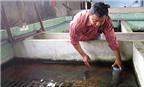 Giải pháp phòng bệnh đảm bảo năng suất lươn nuôi cao