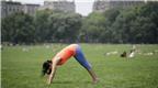 9 động tác yoga dành cho người lười vận động