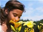 Không ngửi được mùi thối, trẻ có khả năng bị tự kỷ
