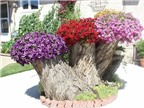 Cách hô biến gốc cây thành chậu hoa trang trí đẹp mắt