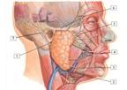 Có triệu chứng này ở mặt dễ bị ung thư